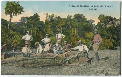 VIBERT & DIXON Alligator Hunters, a good days sport, Panama. - No 325