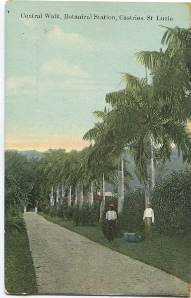 WESTALL & CO Central Walk, Botanical Station, Castries, St Lucia.