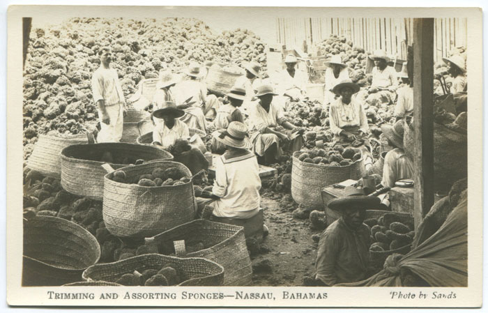 SANDS Trimming and assorting sponges - Nassau, Bahamas.