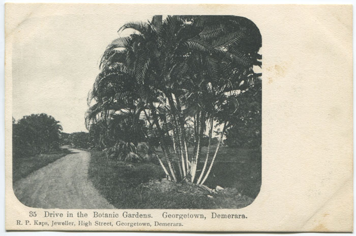 R.P. KAPS Drive in the Botanic Gardens. Georgetown, Demerara. - No 35