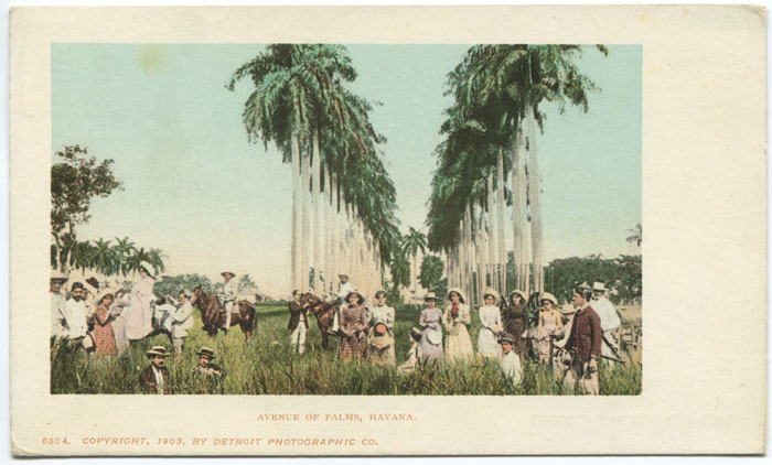 DETROIT PHOTOGRAPHIC COMPANY Avenue of Palms, Havana. - No 6504.