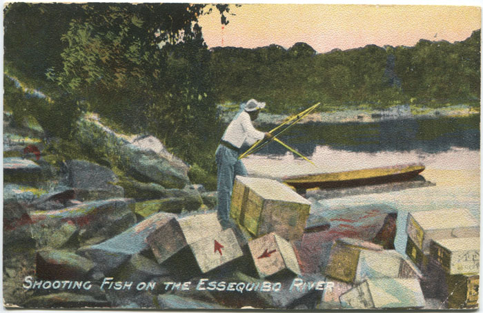 THE ARGOSY CO LTD Shooting Fish on the Essequibo River.