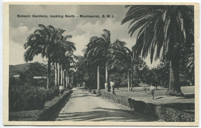 C.E.E. BROWNE Botanic Gardens, looking North - Montserrat, B.W.I.