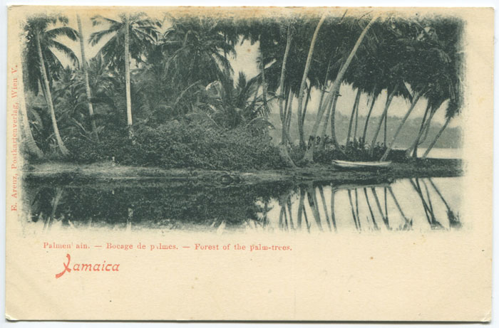 E. ARENZ Palmen ain - Bocage de palmes - Forest of the palm trees. Jamaica.