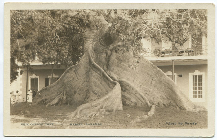 SANDS Silk Cotton Tree - Nassau, Bahamas.