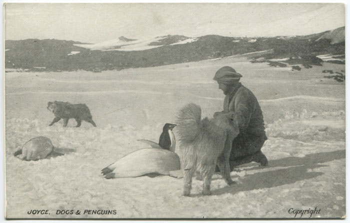 1907-1909 British Antarctic Expedition (Shackleton) Joyce, Dogs & Penguins.
