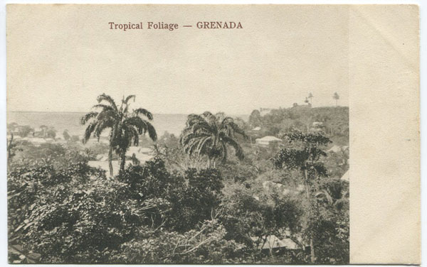 RAPHAEL TUCK & SON Tropical Foliage - Grenada.