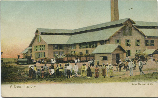 MUIR MARSHALL & CO A Sugar Factory.