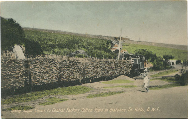 V.E. JOHN Taking Sugar Canes to Central Factory, cotton field in distance. St Kitts, B.W.I.
