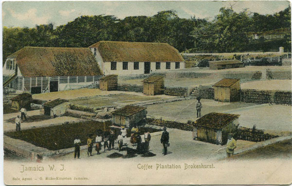 O. MILKE Coffee Plantation Brokenhurst. Jamaica W.I.