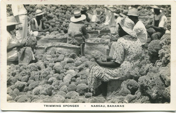 SANDS Trimming Sponges - Nassau, Bahamas.