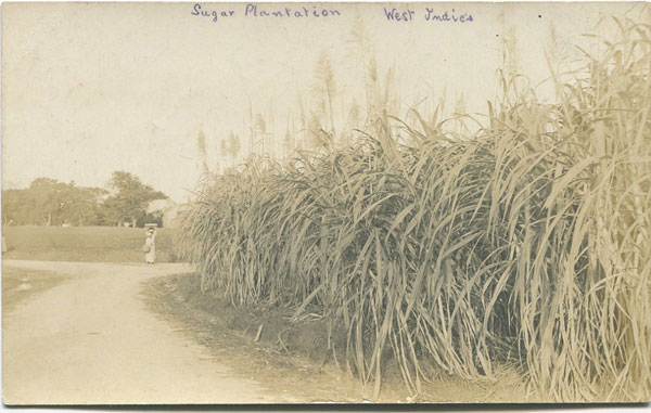 ANON Sugar Plantation, Barbados