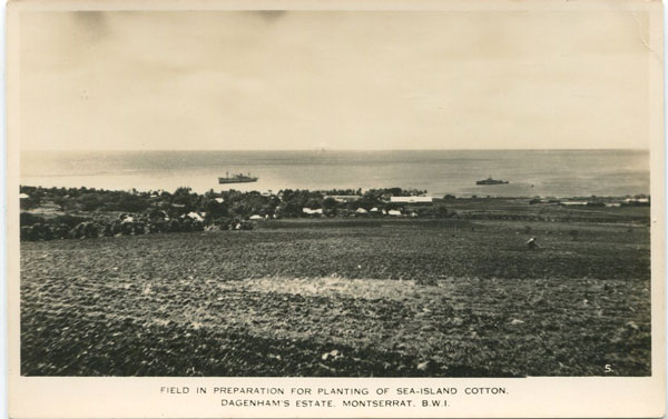 C.E.E. BROWNE Field in preparation for planting of sea-island cotton.  Dagenham Estate, Montserrat, B.W.I.