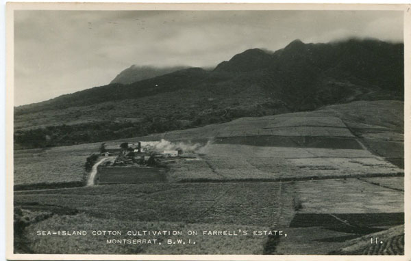 C.E.E. BROWNE Sea-island cotton cultivation on Farrell