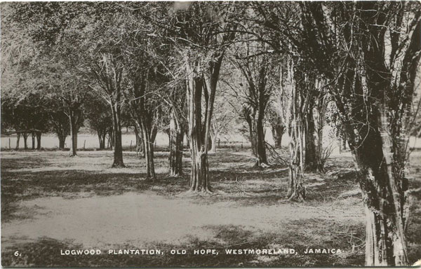 RAPHAEL TUCK Logwood Plantation, Old Hope, Westmoreland, Jamaica - No 6