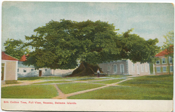 WALTER K. MOORE Silk Cotton Tree, Full View, Nassau, Bahama Islands.