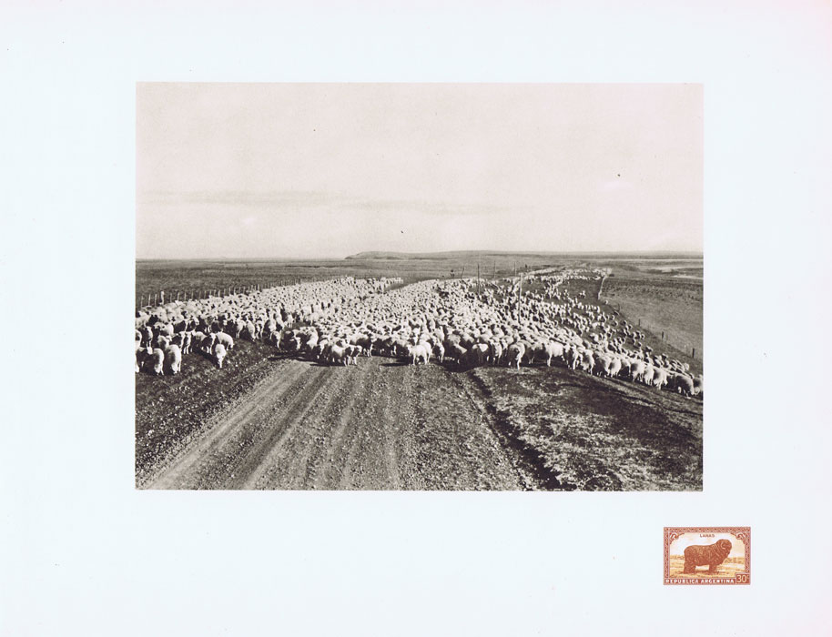 1951 Argentina Helio-Vaugirard Proof of the 1935-51 30c Merino Sheep on corner of photo print.