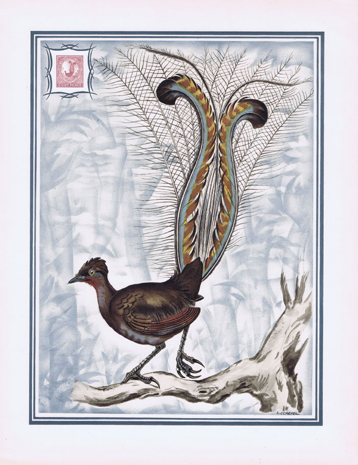 1949 New South Wales Helio-Vaugirard proof of the 1888-9 8d Superb Lyrebird inset into painting of the bird by L. Screpel.