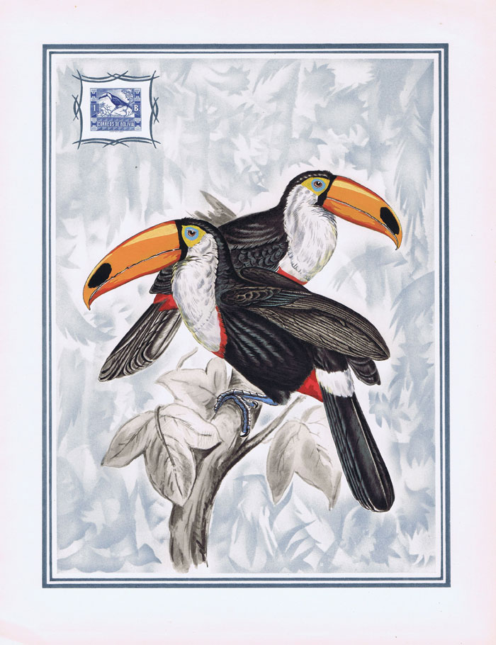 1949 Bolivia Helio-Vaugirard Proof of the 1939 1b Toco toucan inset into painting of the bird by L. Screpel.